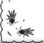 Kytičky levandulí