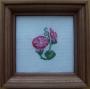 Růžový svlačec
