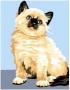 Světlá kočička